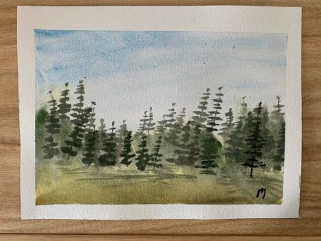 Conifers Slider 1/1