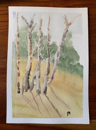 Cedars Slider 1/2