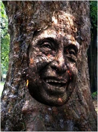 Save Tree Slider 1/1