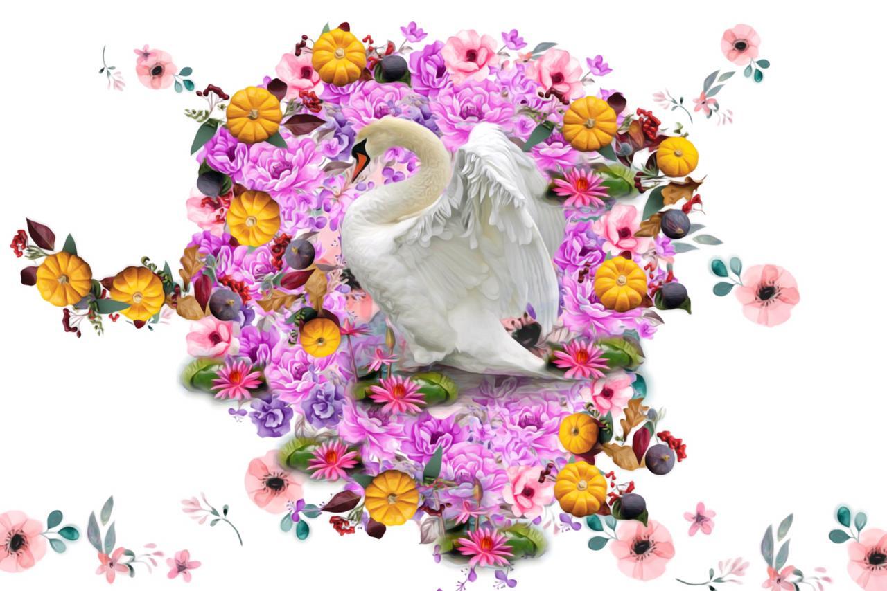 Swan over Pink Flower lake Slider 1/4